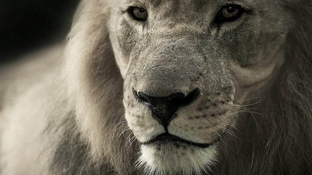 lion-day