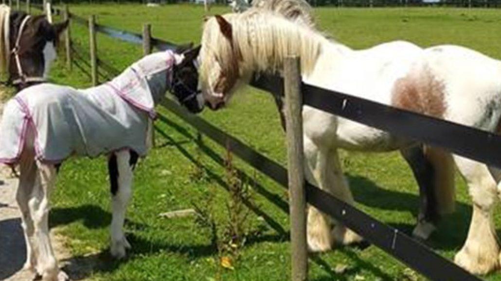 pony-fi