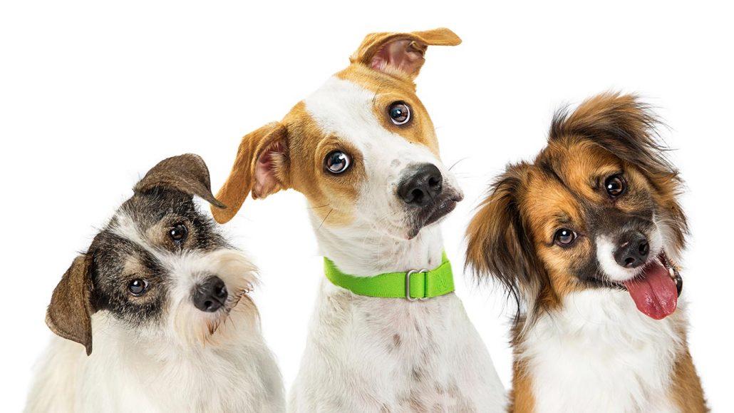 post-language-dogs