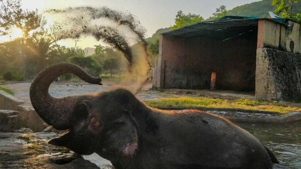 post-lonly-elephant