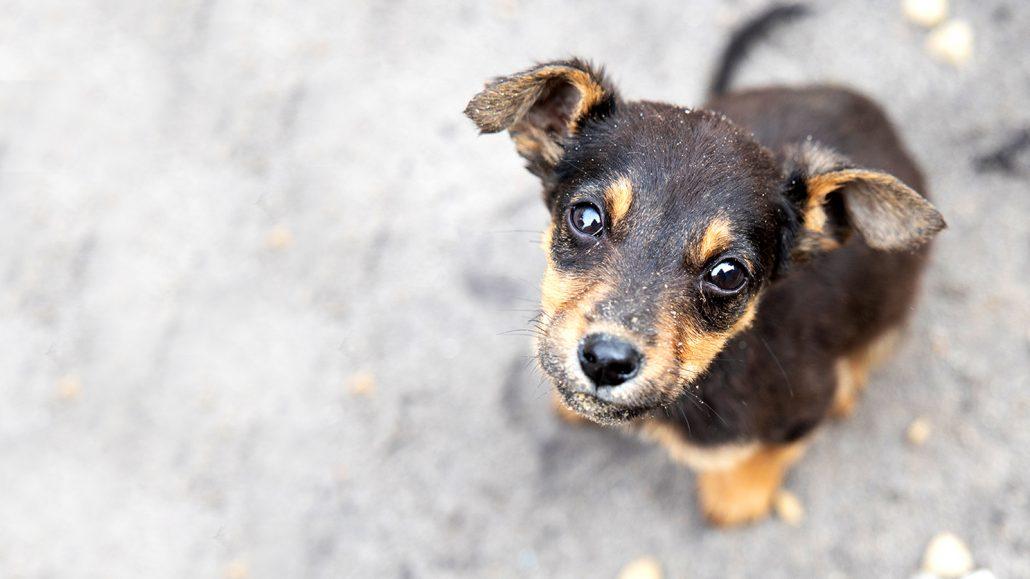 testRS Cute puppy GAWS 0A3A1585