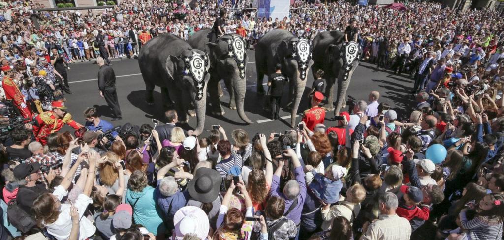 Elephants should be free! 1