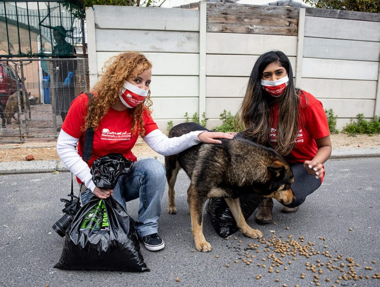 Helping Cape Town Street Dogs