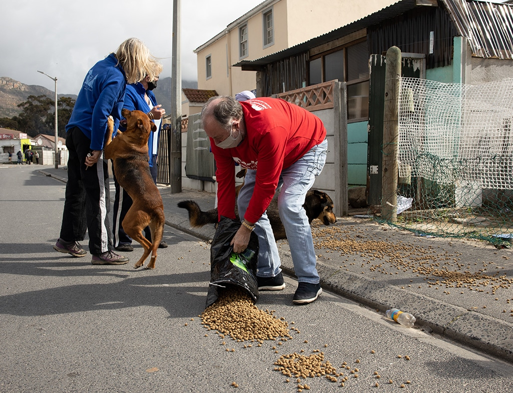 Cape Town Street Dogs Strike It Lucky Thanks to Network for Animals 1