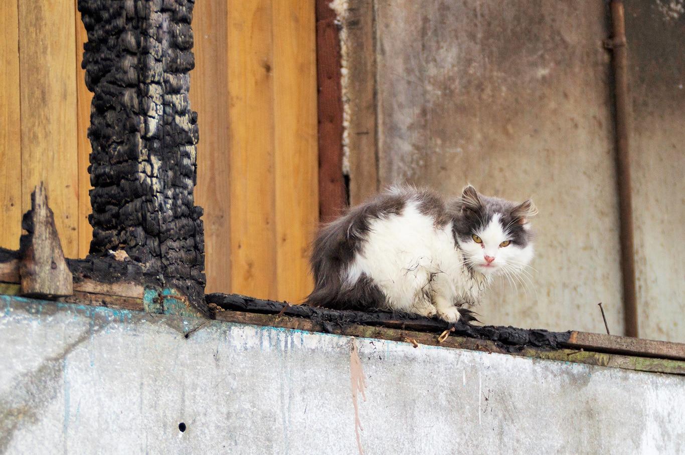 UNPRECEDENTED West Coast FIRES CONTINUE TO RAGE!Animals in MORTAL DANGER! 3