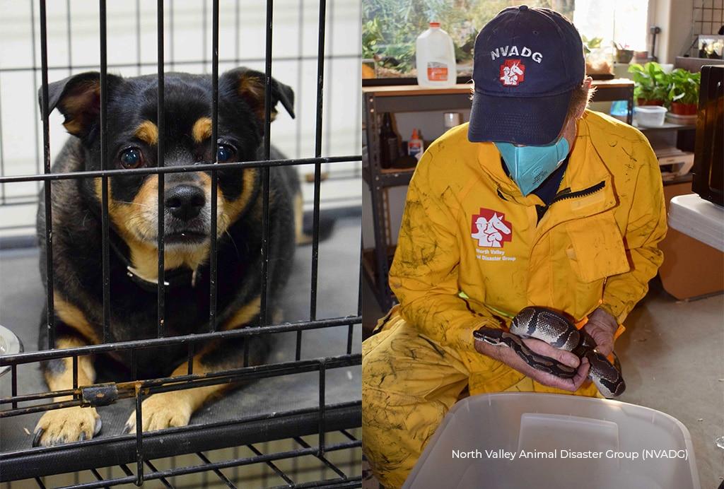UNPRECEDENTED West Coast FIRES CONTINUE TO RAGE!Animals in MORTAL DANGER! 5