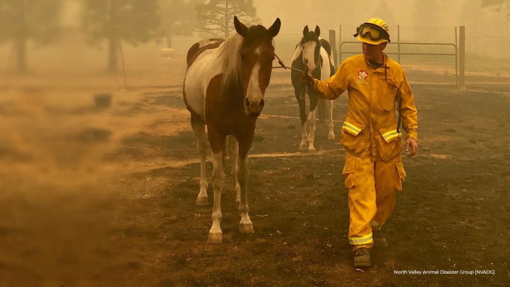 UNPRECEDENTED West Coast FIRES CONTINUE TO RAGE!Animals in MORTAL DANGER! 16