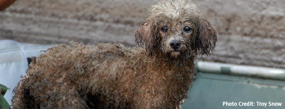 Historic amount raised for Hurricane Harvey Animals 10