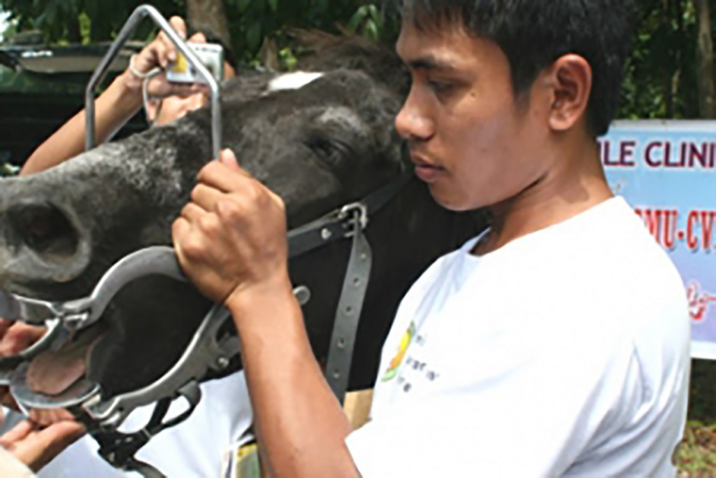 Free Horse Clinic 11