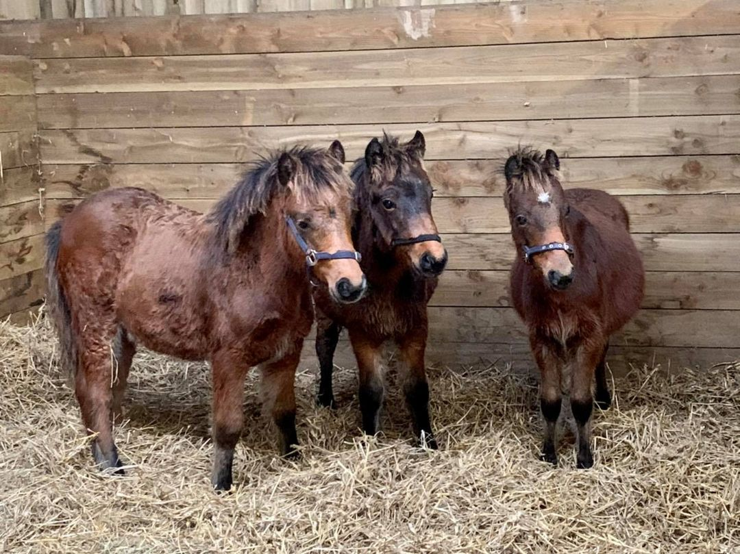A desperate fight to keep 15 ponies alive through winter! 2