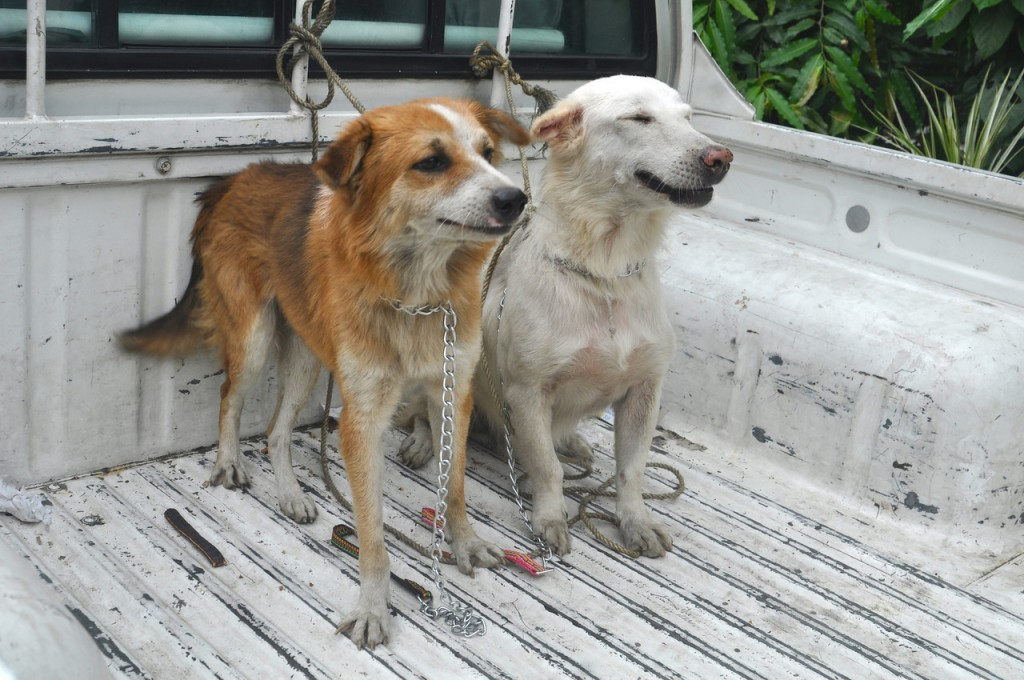Taking Dog Meat Off The Menu in 2015 8