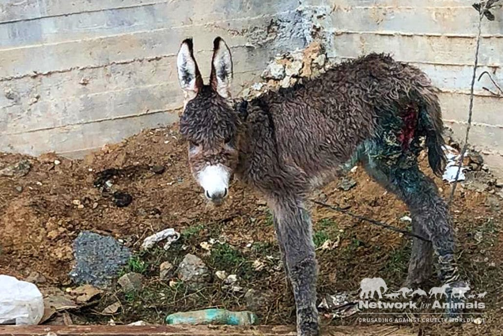 Cruel children separate baby donkey from mother and ABUSE HER! 18