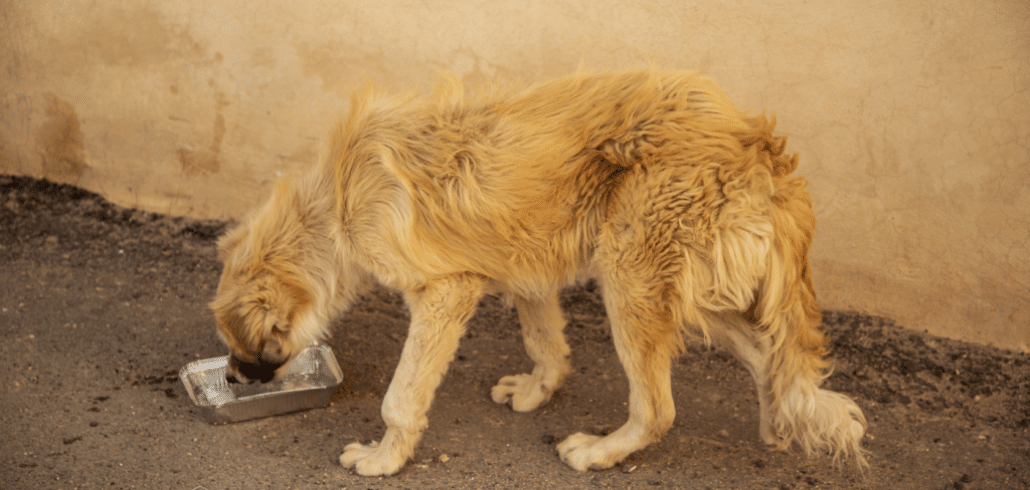 An escalation of hell for the street dogs of Jordan 1