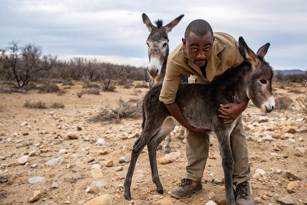 Coronavirus food shortages and now drought conditions threaten our rescued donkeys! 10