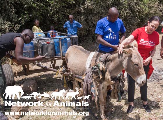 Kenya Donkeys