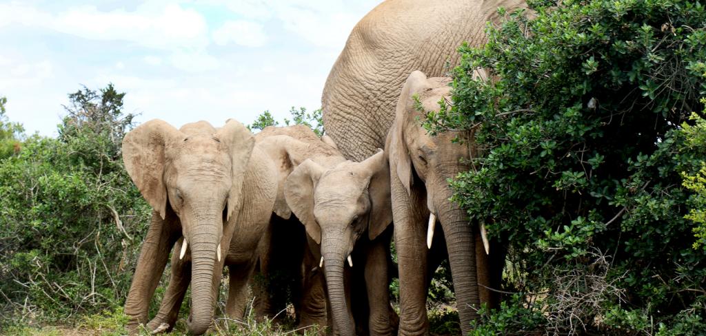 This baby elephant broke my heart… 6