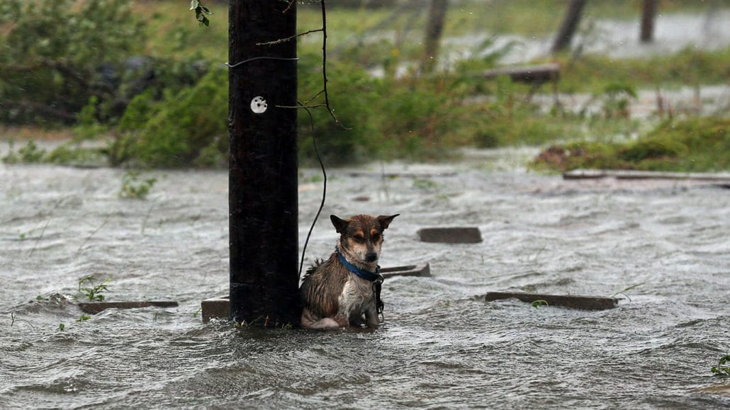 DEADLY LAURA makes landfall! Animals are in DESPERATE need! 27