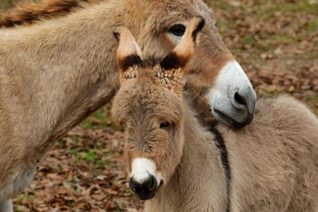 Network For Animals Celebrates World Donkey Day