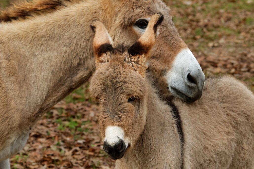 Network For Animals Celebrates World Donkey Day 1