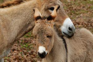 NFA celebrates world donkey day
