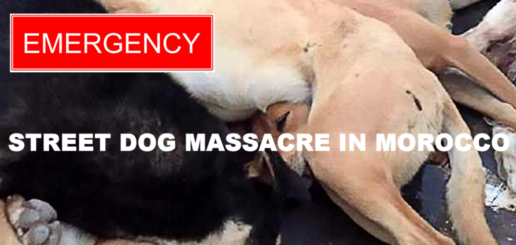 Street dog massacre in Morocco! 1
