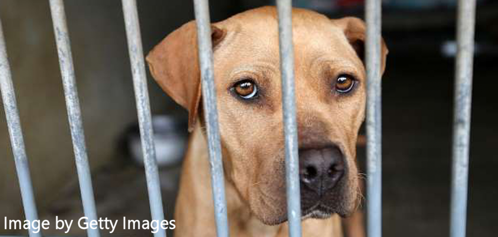 Online registry of animal abusers, a lifetime victory for animal welfare in North Carolina 2
