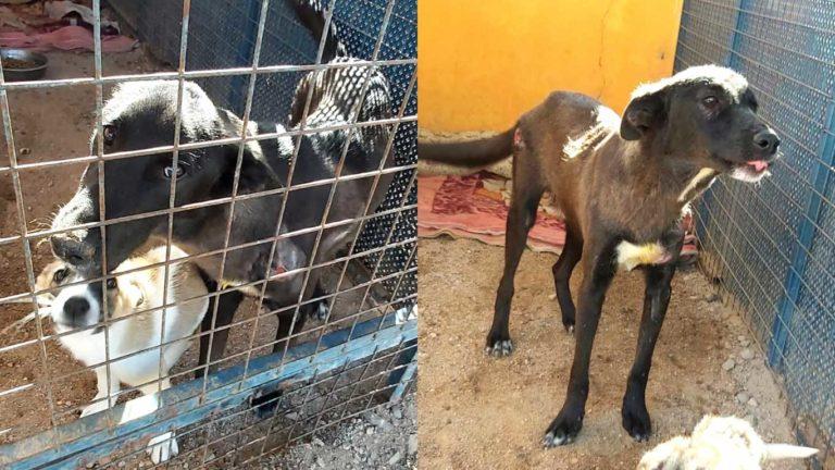 UPDATE: Good News From Jordan For Pepe the Street Dog