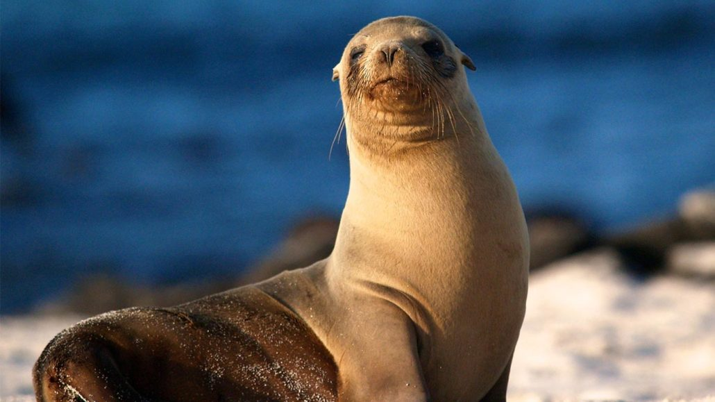 New Zealand City Closes Road To Protect Mother Sea Lion And Pup