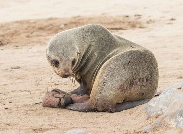 Thousands Of Dead Seal Pups Litter The Namibian Coastline