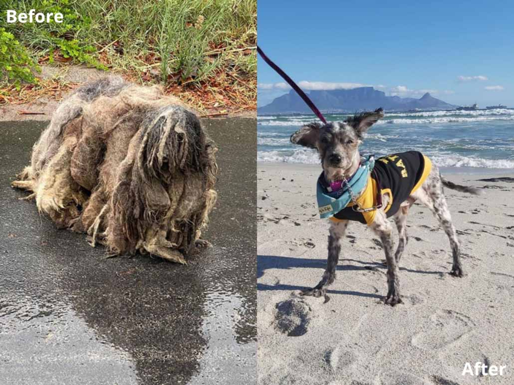 Update: Wookiee, The Unrecognizable Dog, Finds His Forever-Home!