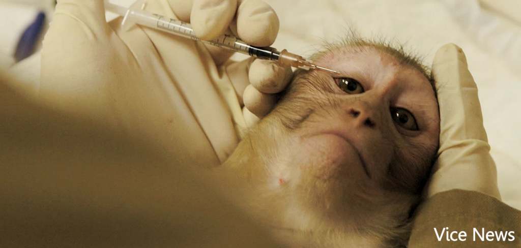 University dubbed 'worst US primate lab' 9