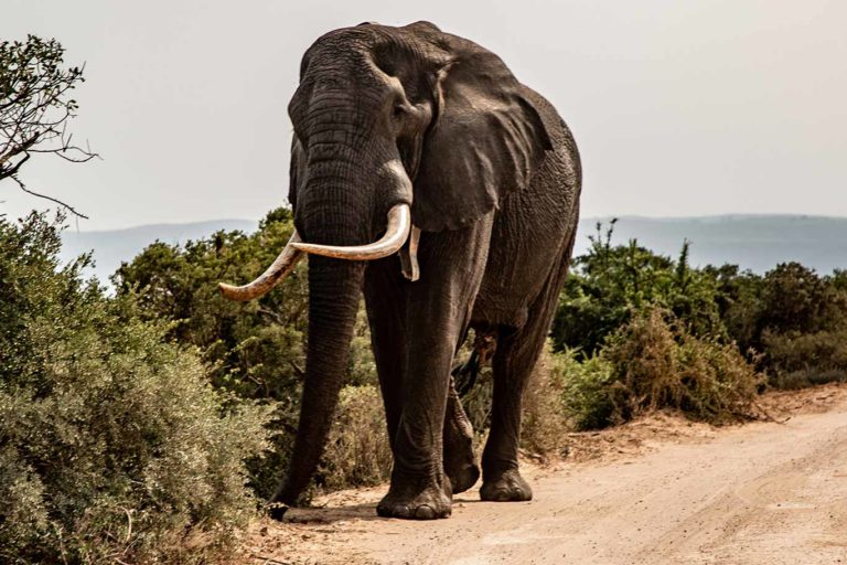NFA's Elephant Translocation Documentary Moving Giants Wins Big At Wildlife Conservation Film Festival