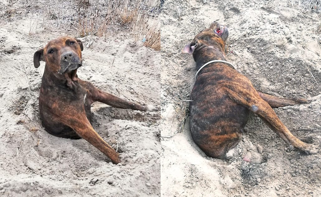 UNBELIEVABLE! Dogs are being BURIED ALIVE! 2