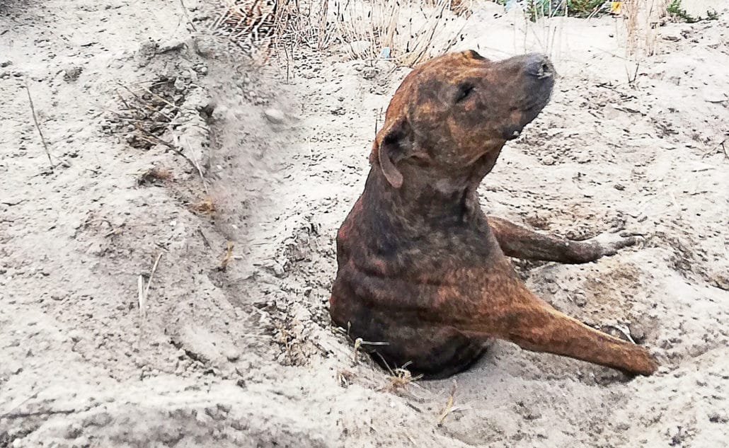 UNBELIEVABLE! Dogs are being BURIED ALIVE! 24