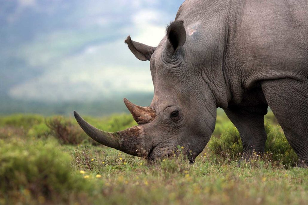 Support World Rhino Day: Don't Make Rhinos The Next Dinos! 8