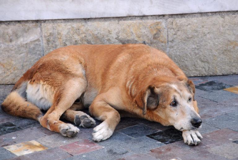 Greece street dogs