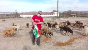 Extermination of dogs in Turkey 1