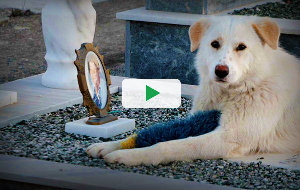 The Greek dogs that grieve for their lost families… 7