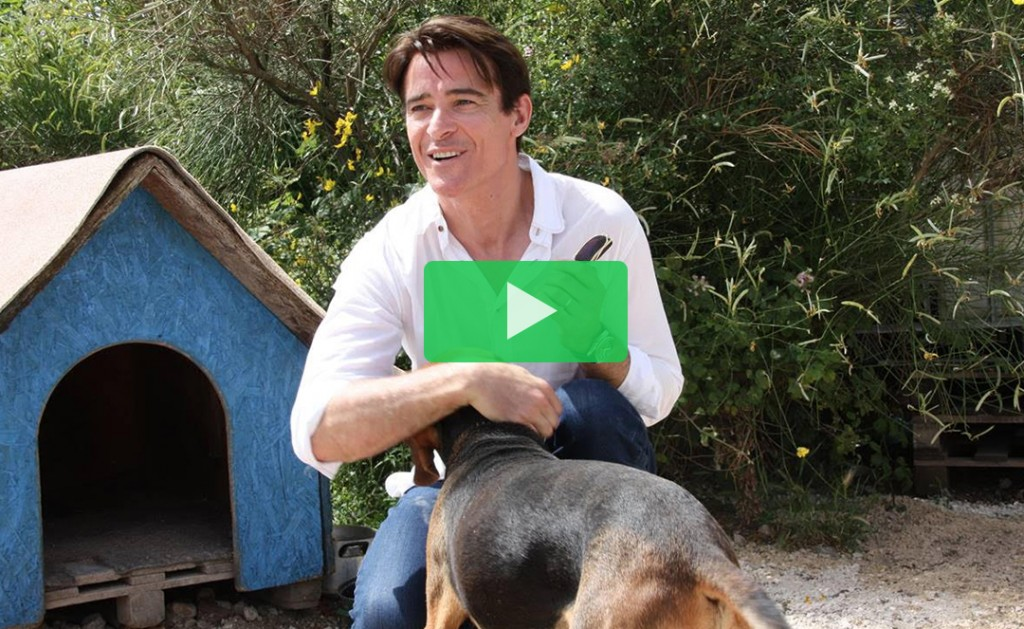 Join Goran Višnjić in supporting the dogs of Dubrovnik 15