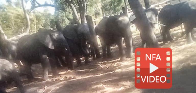 REVEALED: Zimbabwe is now sending baby elephants to Pakistan!