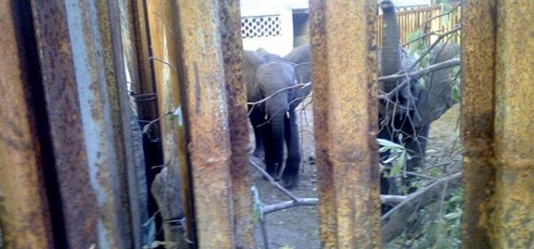 Zimbabwe Elephants: Latest Images / Protest / Petition 2